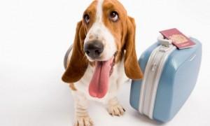 Aerolíneas Argentinas permitirá viajar con mascotas en la cabina