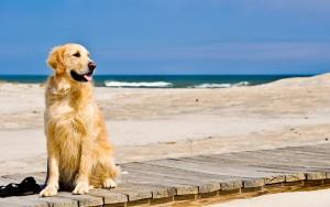 ¿Cómo ir a la playa con mi perro?