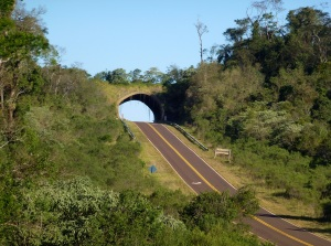 Ecoducto Misiones: Imágenes desde un drone de este puente natural para proteger la fauna único en América Latina