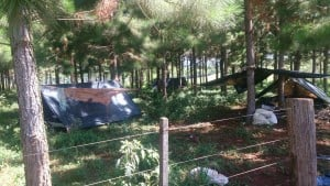 Detectan campamentos y trabajadores sin registrar en yerbales de Oberá
