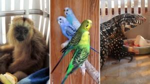 Detuvieron a un hombre con 200 animales exóticos en la casa