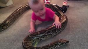 El impactante video de una bebe jugando con una serpiente pitón