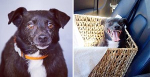 El antes y el después de las mascotas adoptadas