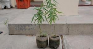 Enojado porque el cuñado la maltrataba, entregó a la Policía la marihuana que él cultivaba