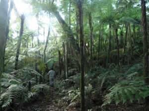 La reserva natural cultural de Papel Misionero es el único reducto de la Selva Paranaense inalterado en la provincia
