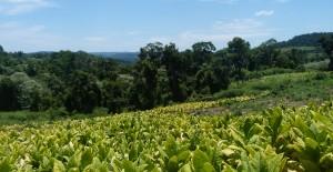 La tenencia regular de tierras  rurales y urbanas es la clave para lograr el ordenamiento territorial sustentable y la conservación de la selva en Misiones