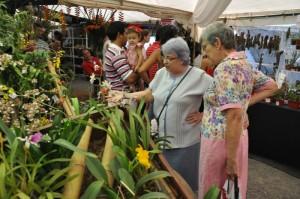 Buscan posicionar a Misiones como proveedor de orquídeas a todo el país