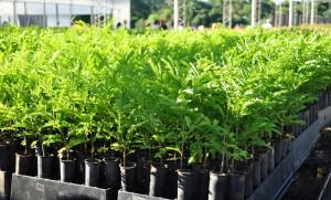 Convocatoria para registro de profesionales para planes de negocios foresto-industriales