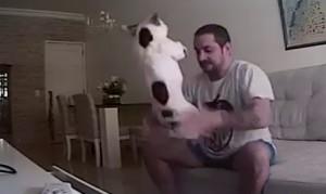 San Pablo: ocultó una cámara y descubrió como su novio maltrataba y golpeaba a sus perros