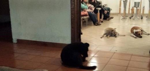 Al velorio de una mujer que amaba a los animales llegaron perros desconocidos y hasta un pajarito, en México