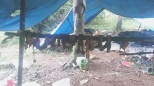 RENATEA detectó campamento y trabajadores sin registrar en establecimiento yerbatero de Andresito