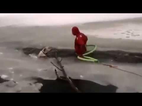 Un perro atrapado en el hielo y un rescate emocionante. Mirá las imágenes
