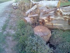 Montecarlo: talaba árboles y uno de los ejemplares le dio en la cabeza: murió en el acto