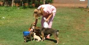 Eldorado: cachorros enfermos, abandonados en el Centro de Zoonosis, infectaron el lugar