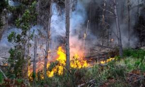 Incendios forestales e inundaciones generan grave emergencia en la industria maderera del país