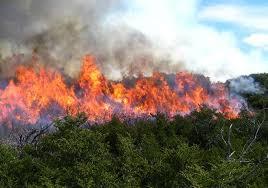 Incendio en un yerbal dejó daños materiales en Alba Posse