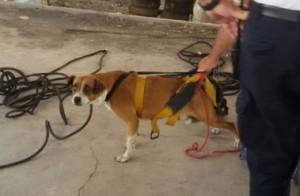 En San Juan tiraron una perra a un pozo de 10 metros por estar en celo