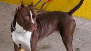Un policía le disparó con balas de goma a una perra