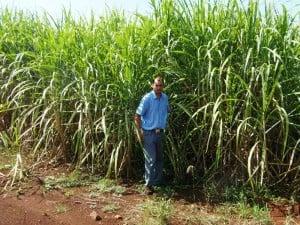 Zafra cañera: se proyecta cosechar 75% más que el año pasado