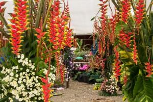 En Biofábrica también aprendé sobre jardinería y paisajismo