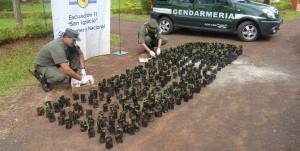 Gendarmería incautó más de mil plantines de marihuana en Misiones