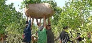 Ministerio de Agricultura autorizó un leve aumento en el precio de la yerba