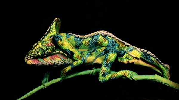 Un camaleón, nueva ilusión óptica en la Web