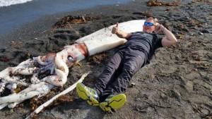 Un calamar gigante de siete metros apareció en las costas de Nueva Zelanda