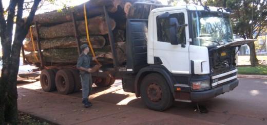 Gendarmería nacional secuestró 25 toneladas de madera nativa en Misiones