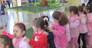 Muestra de la diversidad biológica de Misiones atrae a chicos y grandes