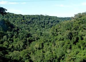 Misiones insiste en el reclamo de más coparticipación en la ley de bosques