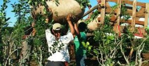 Destacan el aumento salarial del 28 por ciento para los trabajadores rurales