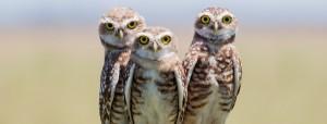 Vuelve la Feria de Aves y Vida silvestre en el acceso a los Esteros del Iberá