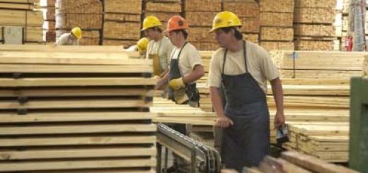 Exportaciones forestales cayeron 27 por ciento en cuatro años