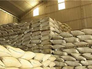 Cosecha record: productores afirman que los precios bajan por abundancia de hoja verde