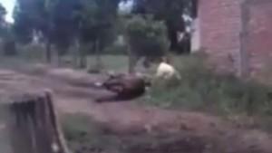 """Filman brutal paliza de un """"domador"""" a un caballo, en Tucumán"""