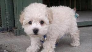 Miles de usuarios piden por Buddy, un perro retenido en un aeropuerto español