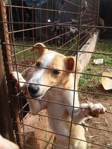 Rescatan a un cachorro que sufría maltratos, golpizas y baños de agua helada