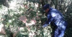 Esclarecen un hurto de yerba mate en Campo Ramón