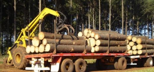 El valor agregado forestal de Misiones cuadruplica al de Corrientes