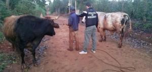 San Vicente: un hombre vendía animales robados y fue detenido