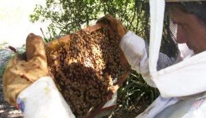 Estudiantes comenzarán a producir miel en Santa Rita