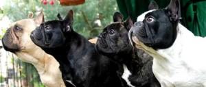 Mañana se realizará una exposición canina en el cuarto tramo de la Costanera
