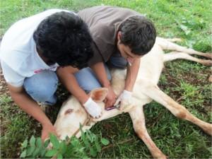 Ejecutarán programa de sanidad animal en la Cuenca Lechera