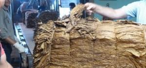 Pagarán 123 millones de pesos de Caja Verde la semana próxima