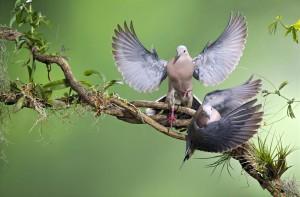 El imperceptible movimiento de las aves, capturado por la lente del fotógrafo Nicolás Pérez