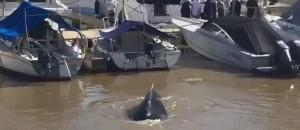 Sorpresa en Puerto Madero porla aparición de una ballena