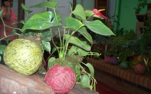 """Plantas """"Kokedama"""", show de música y degustación en las Oficinas del Centro en Posadas"""