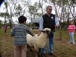 Avizoran un fuerte crecimiento de la producción ovina en Misiones
