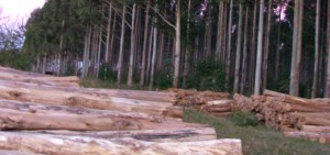 Proyectan inspeccionar más de 50 mil hectáreas forestadas en 2015